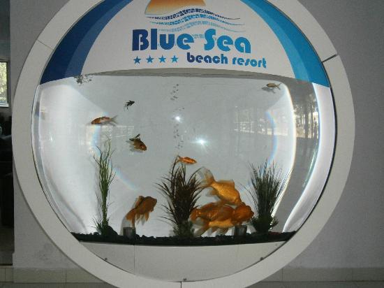 Blue Sea Beach Resort: L' acquario nella hall