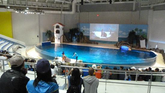 Aquaplanet Jeju