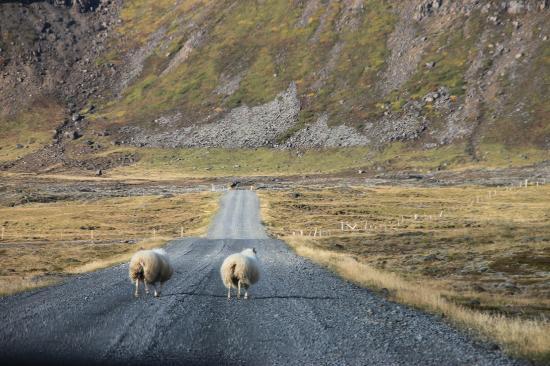 Hja Jonna: Old country road in Selvogur near Thorlakshofn