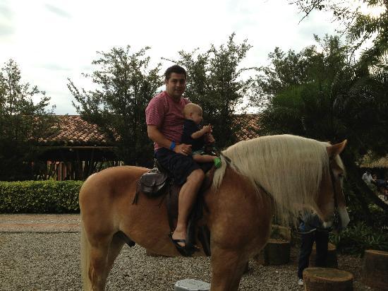 Hotel Decameron Panaca : caballo de raza