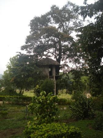 Tree top at Bamboo Grove