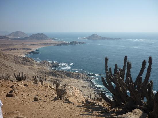 Deserto do Atacama: caminatas visualizando cactus