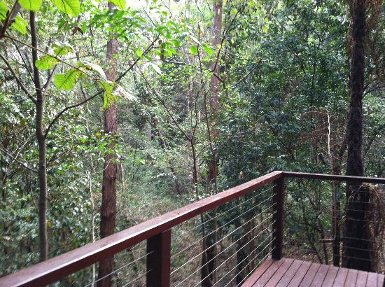 Kondalilla Eco Resort: balcony view