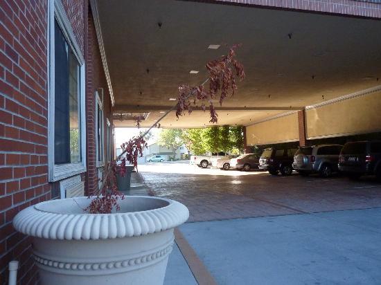 Bristol Hotel : sad dead plant in entry way