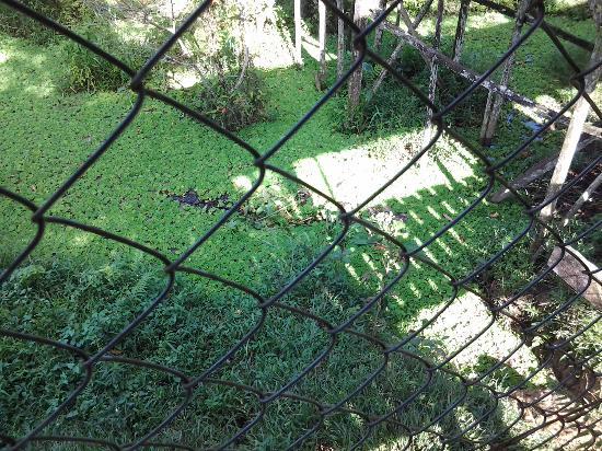Jong's Crocodile Farm & Zoo: Sleeping crocidile