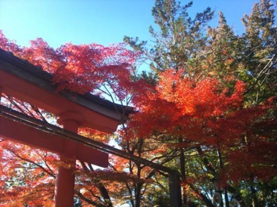 Hachioji, Japan: 紅葉