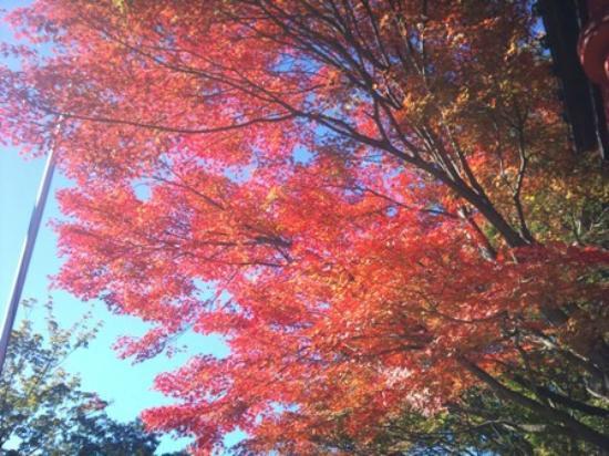 Hachioji, Japón: 紅葉
