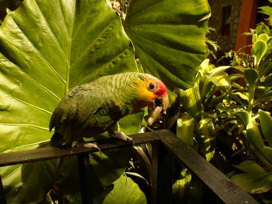 Hotel Casa Arnel : perroquet