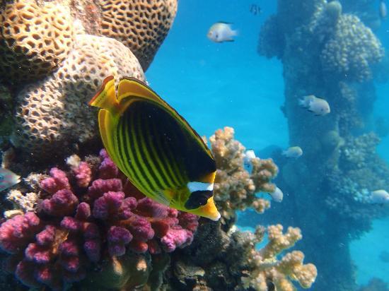 Imperial Shams Resort: Snorkeling at old peers