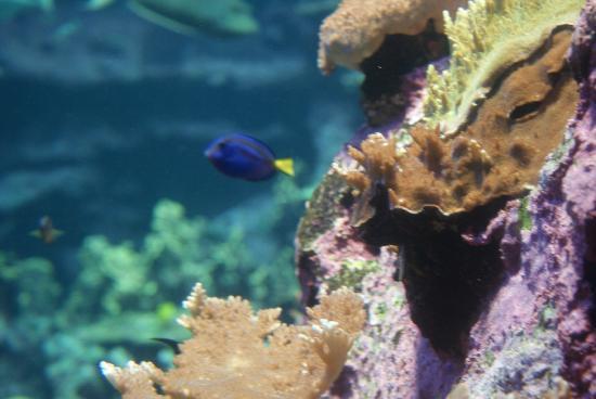 Aquarium picture of la cite de la mer cherbourg for Aquarium de mer