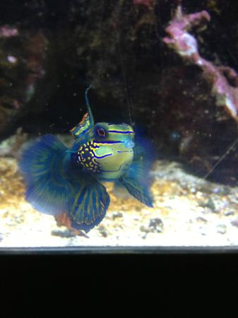 The Most Beautiful Fish I 39 Ve Ever Seen Picture Of