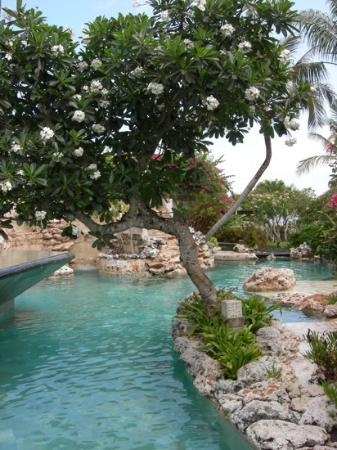 AYANA Resort and Spa: view of one part of lower half of villa pool.