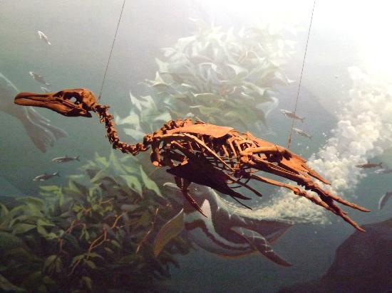 Smithsonian National Museum of Natural History: Bones 6