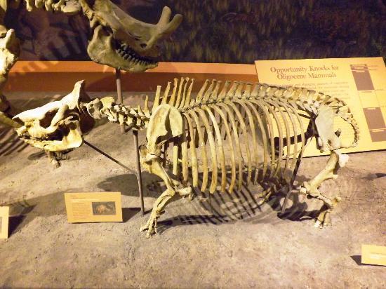 Smithsonian National Museum of Natural History: Bones 2