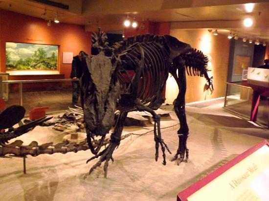Smithsonian National Museum of Natural History: Bones 10