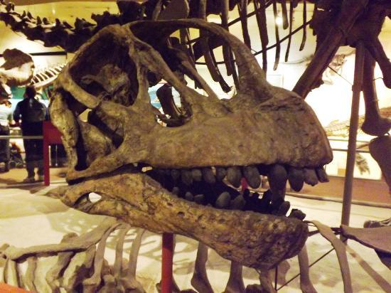 Smithsonian National Museum of Natural History: Bones 4