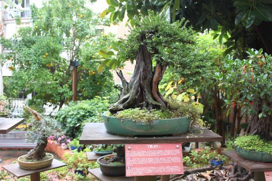 Bahia Tropical Hotel: jardin muse de bonzai a Almunecar