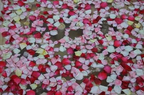 Casa Taos: scattered rose petals