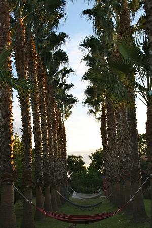 Casa Taos: palm trees and hammocks