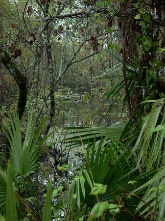 Jean Lafitte National Historical Park and Preserve: swamp
