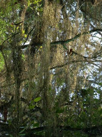 Jean Lafitte National Historical Park and Preserve : spanish moss