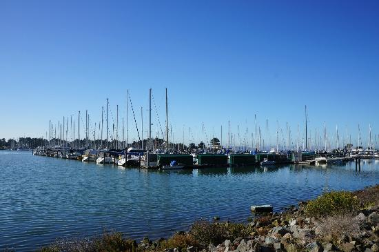 DoubleTree by Hilton Berkeley Marina: la marina