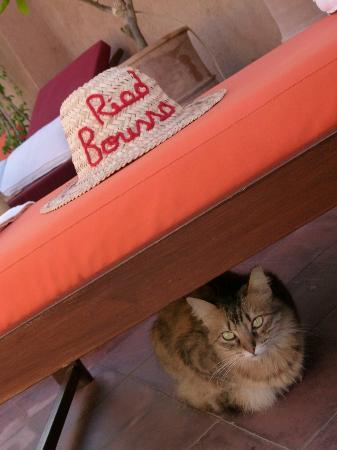 Riad Boussa terrasse