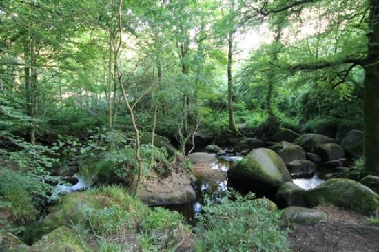Foret de Huelgoat : A forest full of rocks