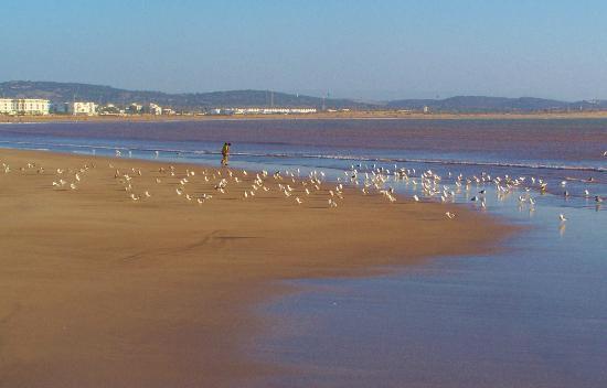 Essaouira Beach: Playa de Essaouira