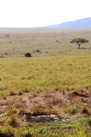 Nairobi, Kenya: 豹