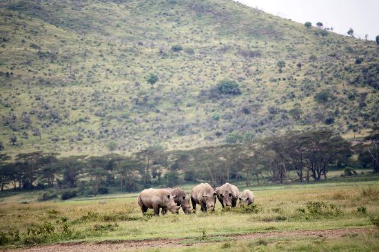 Nairobi, Kenya: 犀牛