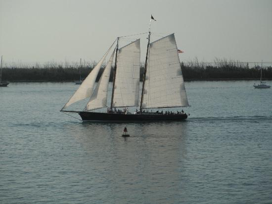Pier House Resort & Spa: Sailboat