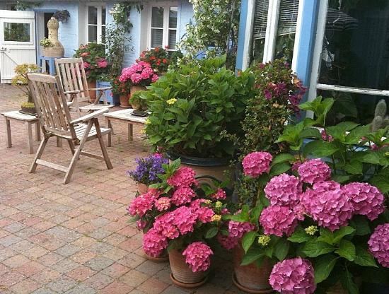Jardin Fleuri Picture Of La Maison Bleue En Baie Le Crotoy