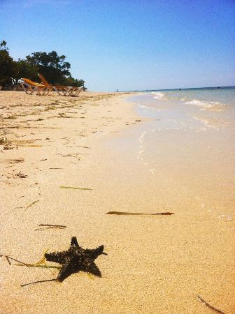 Iberostar Rose Hall Beach Hotel: Starfish I found on the reef...I put it back! So cute!!