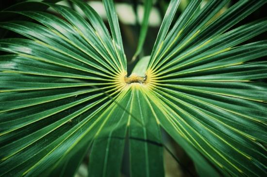 Myriad Botanical Gardens: Palms at Myriad Gardens in OKC, OK