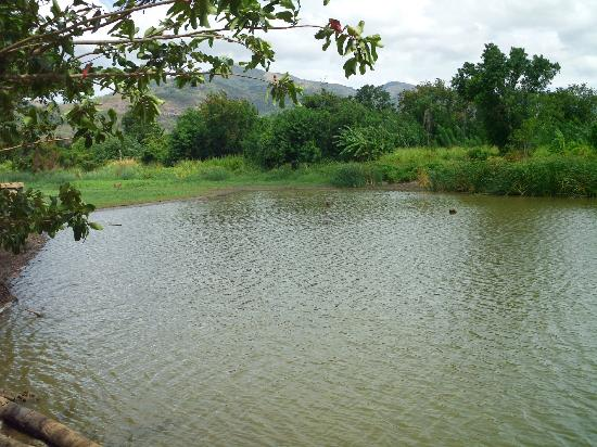 MPS Village: Lake