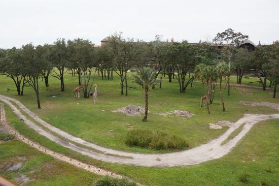 Disney's Animal Kingdom Villas - Kidani Village: View from room