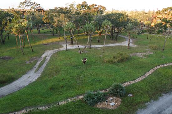 Disney's Animal Kingdom Villas - Kidani Village: View from room