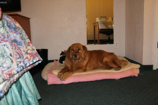 La Quinta Inn Santa Fe : Dog Was Welcomed