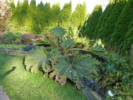 Evergreen Arboretum U0026 Gardens: Some Of The Foliage