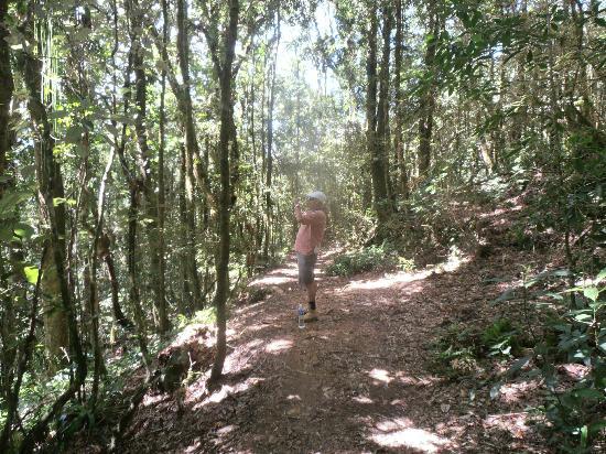 Parque Nacional La Tigra: trail