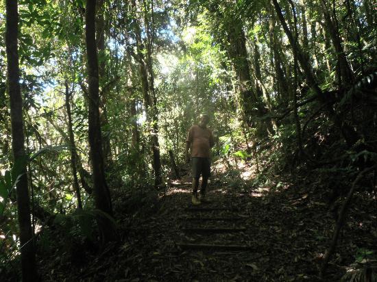 Parque Nacional La Tigra: cloud forrest trail