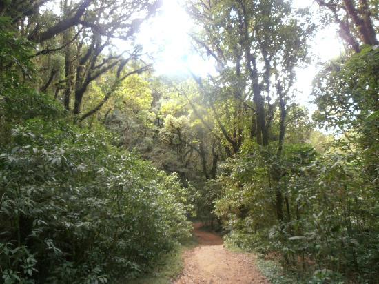 Parque Nacional La Tigra: c loud forrest trail