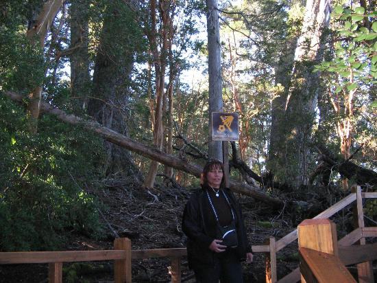 Bosque de Arrayanes: bosque