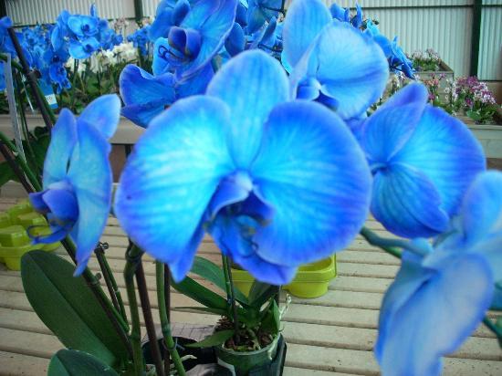 Oasis Park Fuerteventura: orchidee