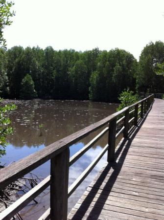 Kota Kinabalu Wetland Centre : nice working timber path