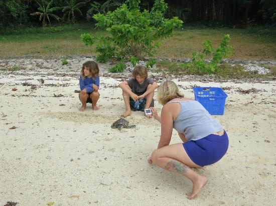 Tranquillity Island Resort & Dive Base: A Hawksbill turtle is released