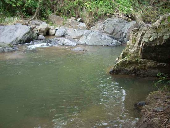 Penuelas, Puerto Rico: Rio Tallaboa surrounds our property.