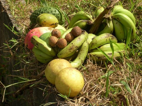 Cabanas El Rucio: Fruits from our farm