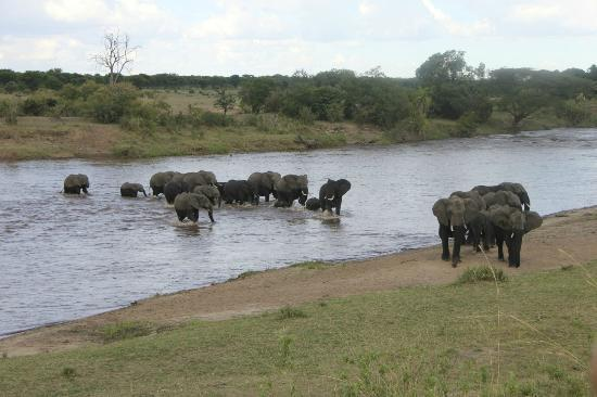 Serengeti Safari Camp, Nomad Tanzania: elephant crossing